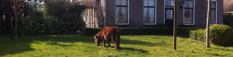 paarden lymfe drainage